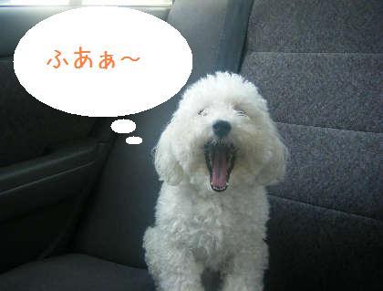 2008_09130027.jpg