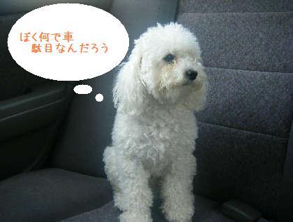 2008_09130028.jpg