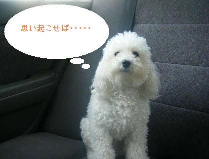 2008_09130029.jpg