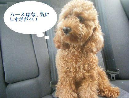 2008_09130034.jpg