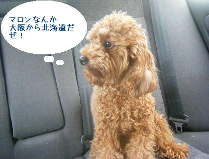 2008_09130035.jpg