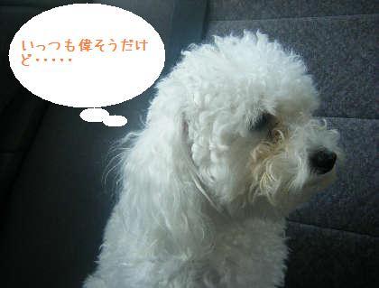 2008_09130042.jpg