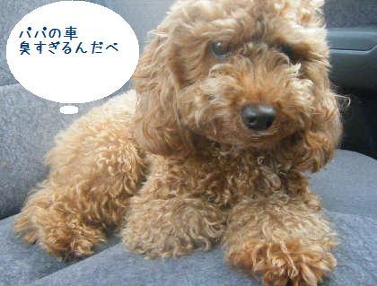 2008_09130045.jpg