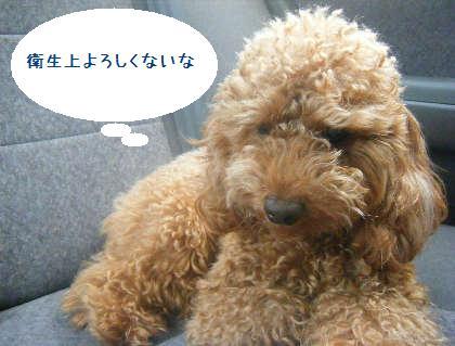 2008_09130048.jpg