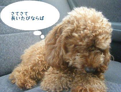 2008_09130050.jpg