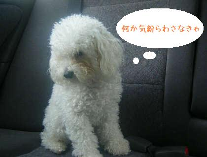 2008_09130054.jpg