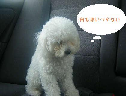 2008_09130056.jpg