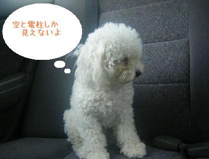 2008_09130060.jpg