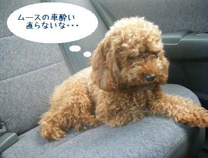 2008_09130061.jpg