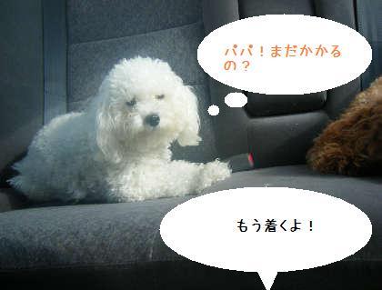 2008_09130062.jpg