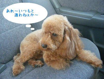 2008_09130066.jpg