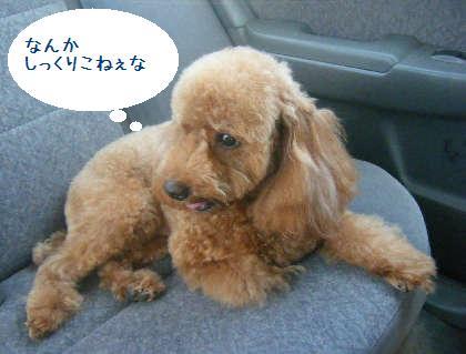 2008_09130067.jpg