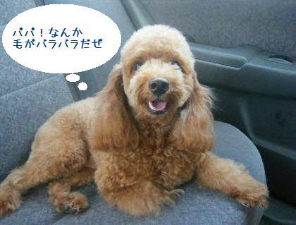 2008_09130069.jpg