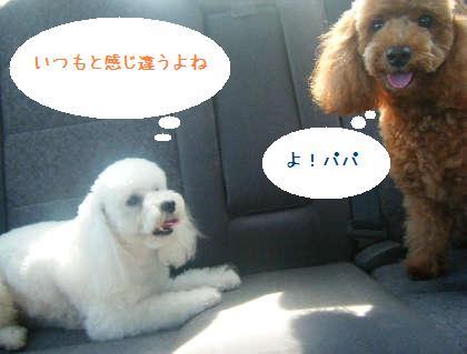2008_09130074.jpg
