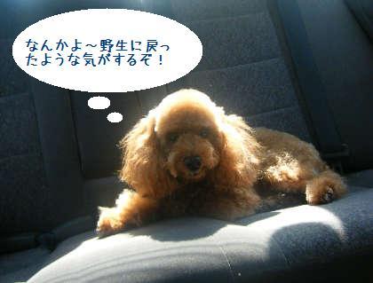 2008_09130076.jpg