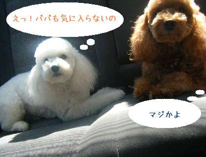 2008_09130078.jpg