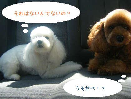 2008_09130079.jpg