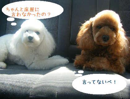 2008_09130084.jpg