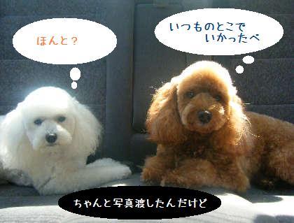 2008_09130085.jpg