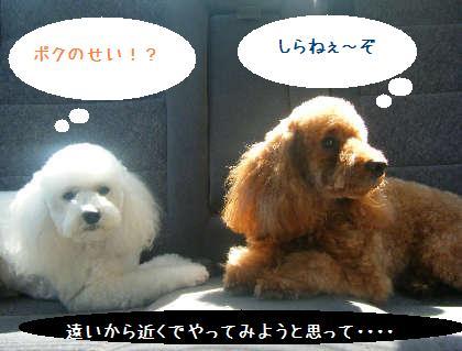 2008_09130086.jpg