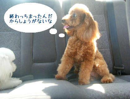2008_09130090.jpg