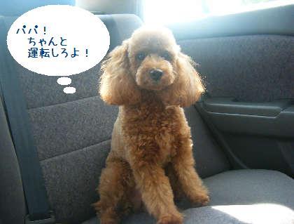 2008_09130096.jpg