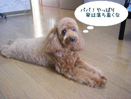 2008_09130107.jpg