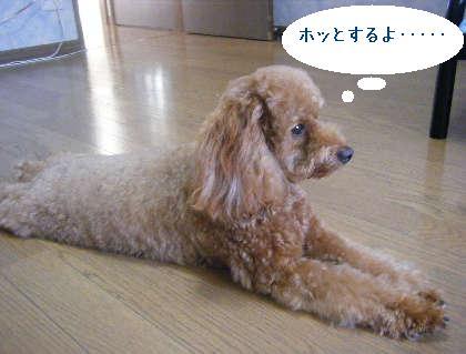 2008_09130108.jpg