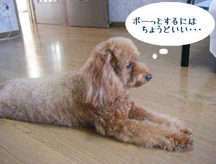 2008_09130110.jpg