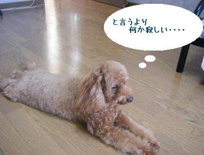 2008_09130112.jpg