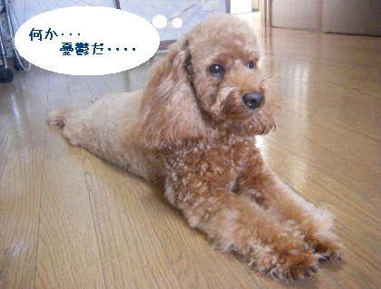 2008_09130114.jpg