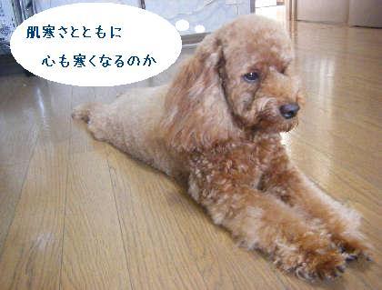 2008_09130116.jpg