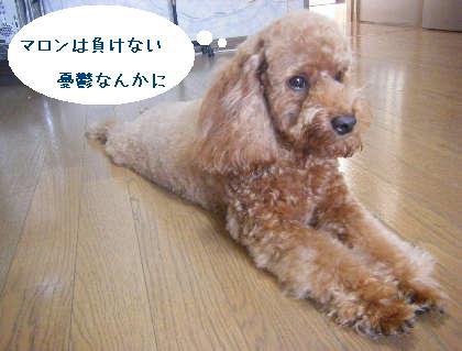 2008_09130117.jpg
