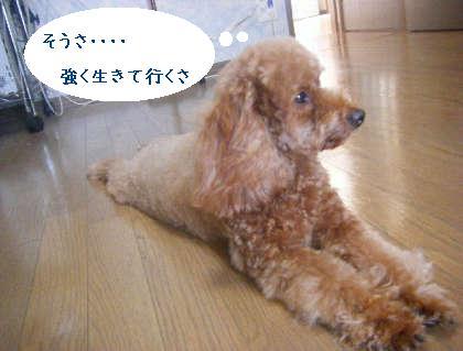 2008_09130118.jpg