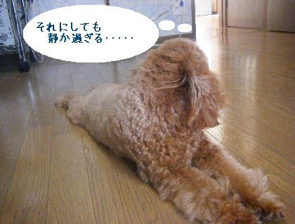 2008_09130119.jpg