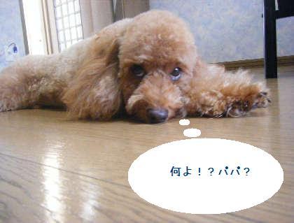 2008_09130120.jpg