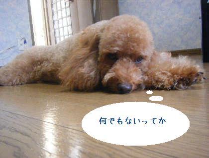 2008_09130121.jpg