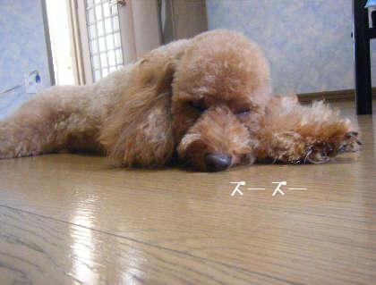 2008_09130124.jpg