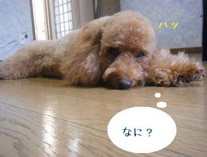 2008_09130125.jpg