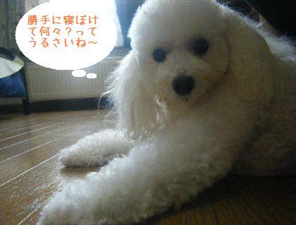 2008_09130132.jpg