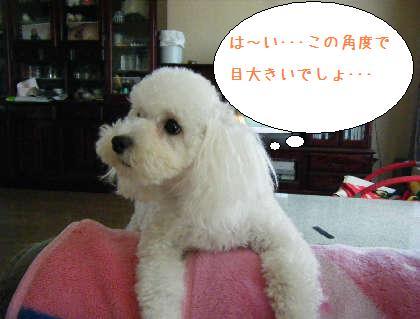 2008_09140007.jpg