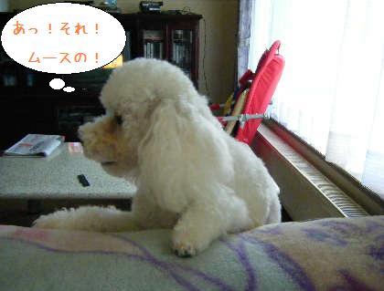 2008_09140011.jpg