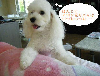 2008_09140019.jpg