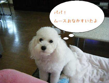 2008_09140021.jpg