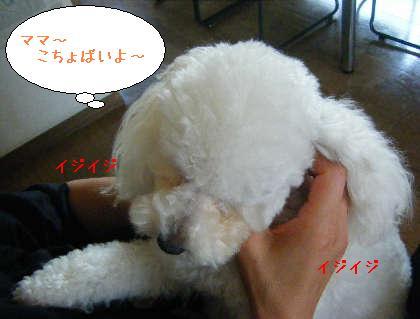 2008_09140028.jpg