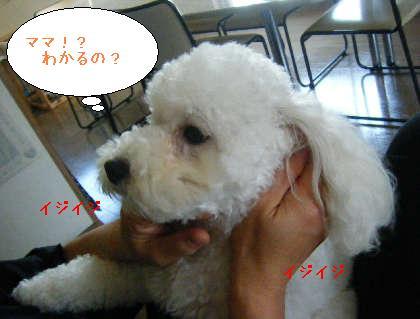 2008_09140030.jpg
