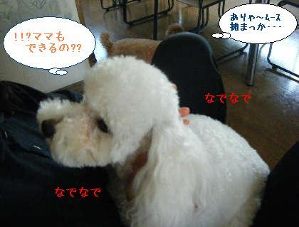 2008_09140031.jpg
