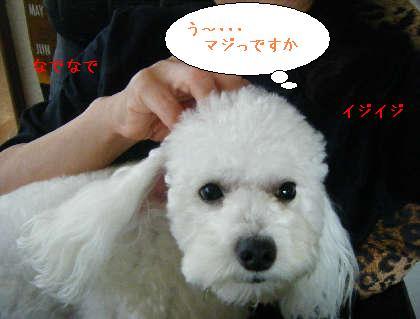 2008_09140036.jpg