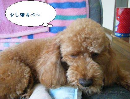 2008_09140043.jpg