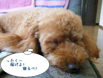 2008_09140064.jpg